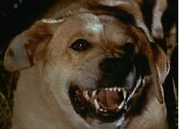 Old Yeller Movies that ruined My Childhood Rabies